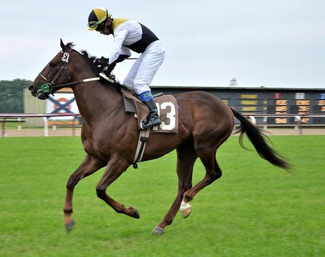 race-horse-715628_640